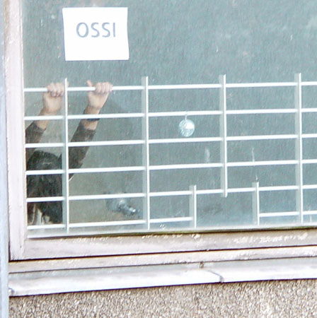 ossi h�ngt