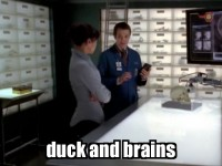 duck and brains