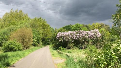 wald hinter henningsdorf