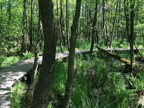 feuchtwaldweg