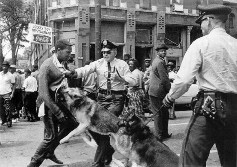 Protest observer in Birmingham, Alabama, USA, on 3 May 1963, being attacked by police dogs during a